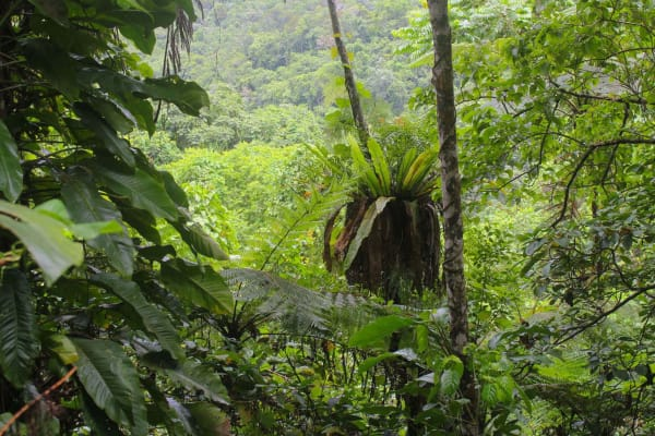 Drawa Rainforest – Fiji