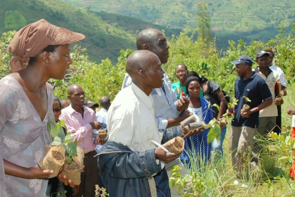 Trees for Global Benefits – Uganda