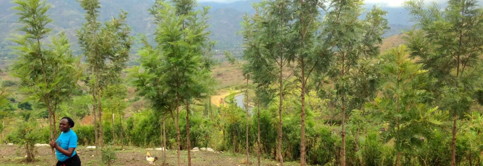Tropical tree planting: the key to climate action and supporting climate-sensitive communities