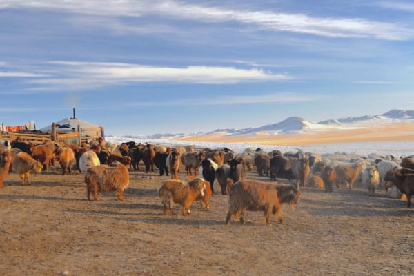 Pastures conservation Climate Action Mongolia Plan Vivo nomadic herder hut and herd